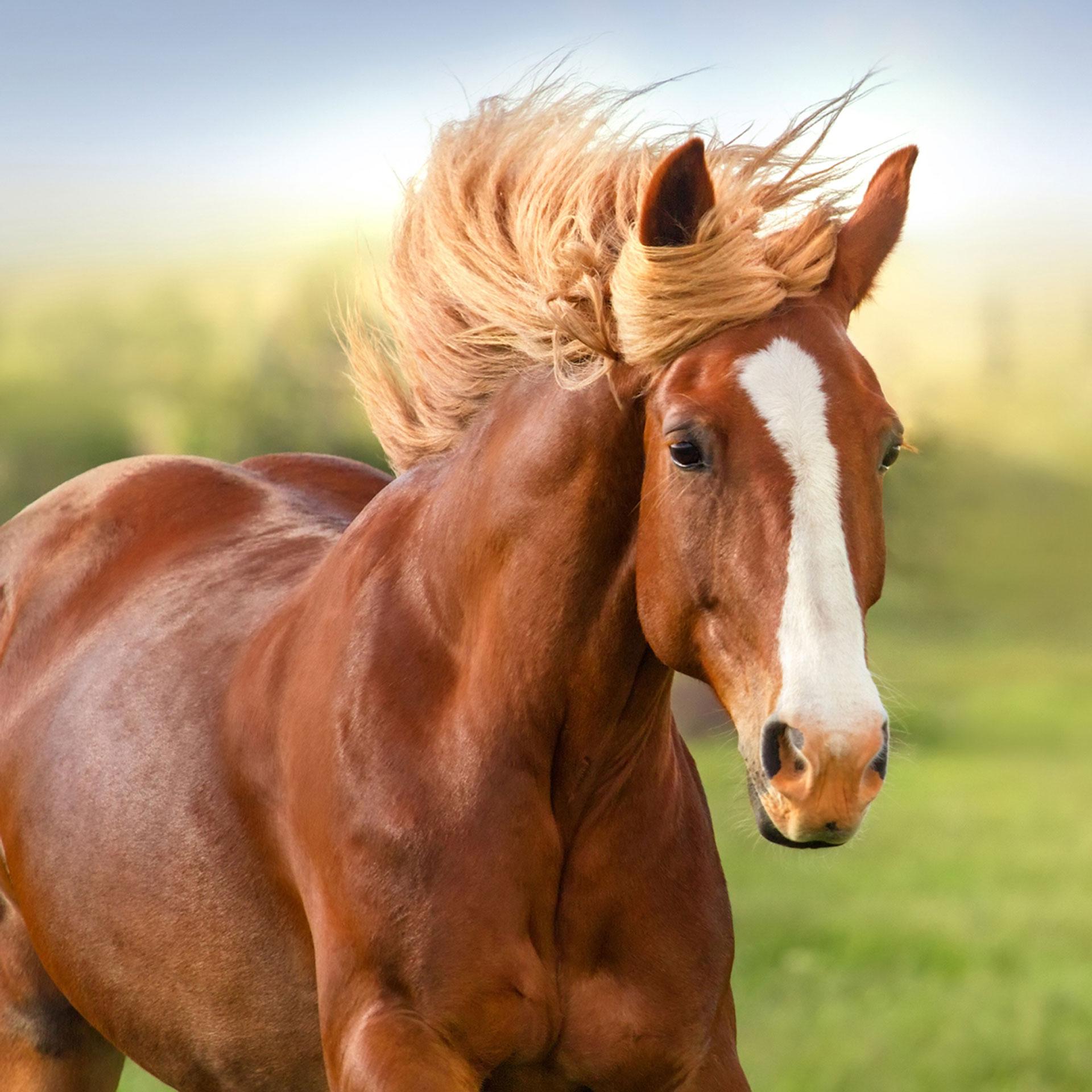 اسب- تصویر اصلی
