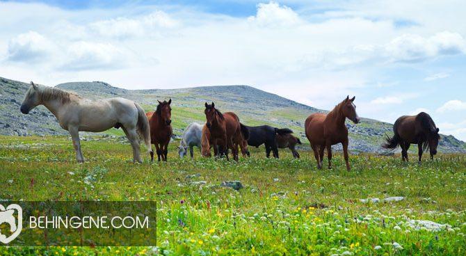 تنوع اسب ها
